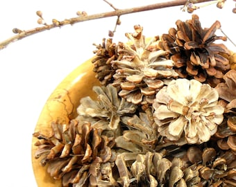 Natural Bleached Pine Cones Free Shipping Hostess Gift, Holiday Decor, Home Decor