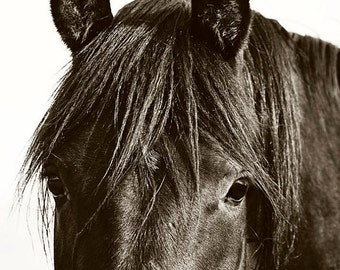 Reserved Listing for Sharon, Black Horse Photograph