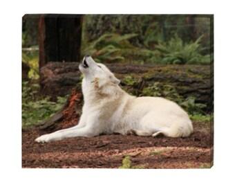 Howling Wolf 16 X 20 Canvas - Orignal Art