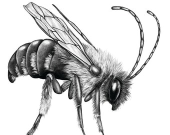 A Silver Liquor Only Now Remains - Right bee - Limited edition print