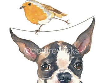 Dog Watercolor 8x10 PRINT - Boston Terrier, English Robin, Daredevil Bird, Funny Painting