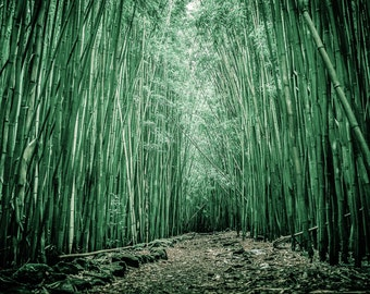"""Bamboo Forest Print 8 1/2""""x 11"""""""