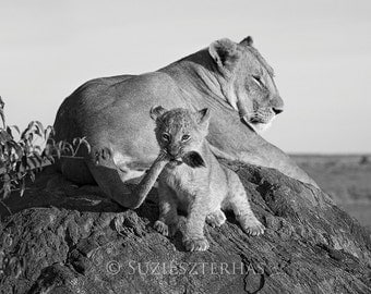 LION BABY PLAYING Photo, Black and White Print , Mom and Baby Animal Photography, Wildlife Photography, Wall Decor, Safari Nursery Art, Cub