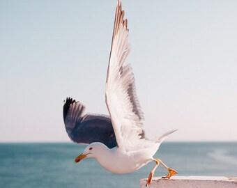 Seagull Photography, Bird Beach Wall Art, Periwinkle, White, Pale, Coastal, Seashore, Cerulean, Tufts-Blue, Bird Photograph - Departure