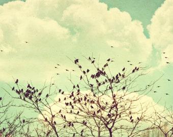 Bird Photography - Mint Green Photo - Pastel Photography - Square Photo - Wall Print - Tree Photography - Sky Photography - Dorm Photo