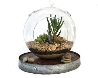Globe - Wine Barrel and Glass Terrarium