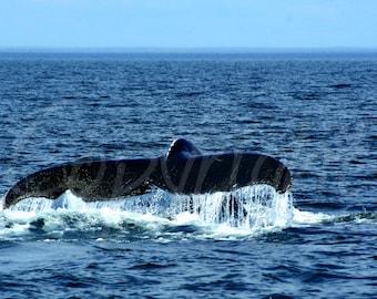 Whale Tail, Humpback Whale, Print or Greeting Card, Coastal, Nautical, Ocean, Photography, Gift Idea, Home Decor, Wall Art, Nature