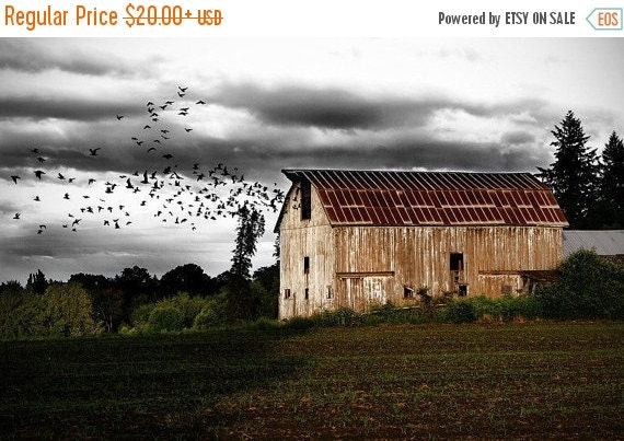 FLASH SALE til MIDNIGHT Birds in a Barn Photographic Art Print, Wall Art for Home decor, 12 Sizes Available from Prints to Mounted Canvas
