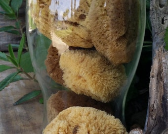 Assorted Natural Sea Sponges for Bath/Beauty, Cleaning, Coastal Decor, Crafts & Display/ Eco Friendly Healthy Alternative