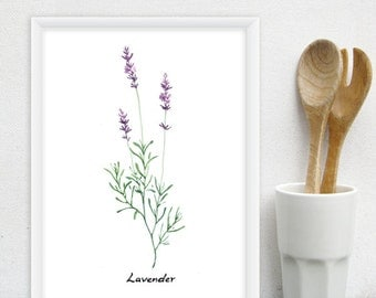Lavender Kitchen Art - Culinary Herb Print, Watercolor Kitchen Herb - 8x11 Purple Floral, Kitchen Decor