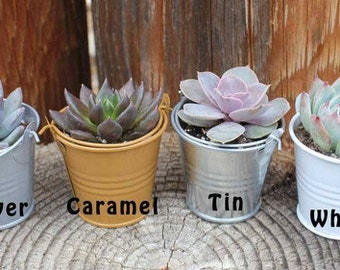 "60 DIY Lovely Wedding Collection Succulents in 2"" containers with 60 Adorable Pail-Your Choice of Color- Party FAVOR Kit succulent gifts*"
