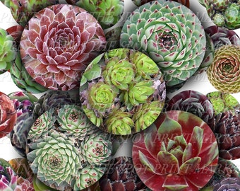 "Sempervivum Hart Grey Dawn Witchery Digital Download Collage Sheet Hens & Chicks Hardy Succulents Plants 1"" 1 Inch Circles Bottle Caps (22)"