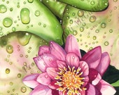 """Watercolor Print """"Waterlily with Drops"""" by Sandi McGuire"""