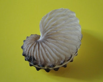 Seashells 50mm Brown Paper Nautilus Shell