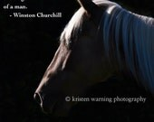 Custom Order, Equine Photography, Winston Churchill, Horse Photos, Horses