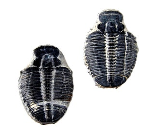 Trilobite Fossil Cufflinks - Fossils - Trilobites - Wedding Gift - Handmade - Gift Box Included