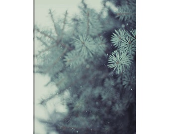 iCanvas Winter Pine Gallery Wrapped Canvas Art Print by Chelsea Victoria