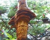Sage,   the pine knot wood spirit