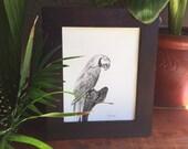 Parrot sketch, original artwork, 8x10