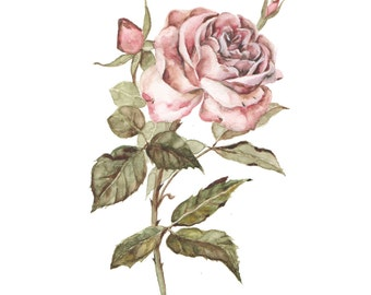 Rose Watercolor - PRINT
