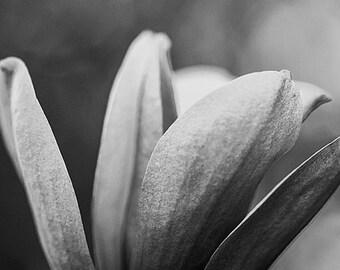 Muted Flower