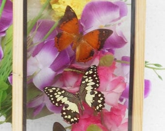 4 REAL mixed BUTTERFLIES Taxidermy Double Glass in Frame /BFD04O