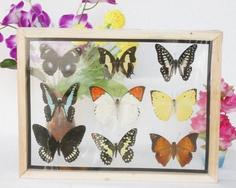 REAL mixed BUTTERFLIES Taxidermy Double Glass in Frame /M90Z