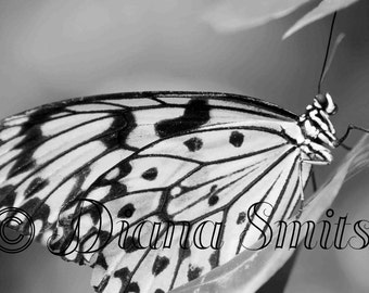 Paper Butterfly, Photo, black and white, Digital Download, Fine Art, Nature Photography, Animal Photography, Macro Photography, Close Up