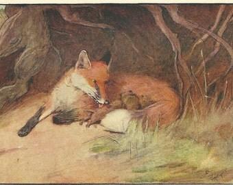 Vintage Fox Print Etsy