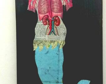 Mermaid Guts