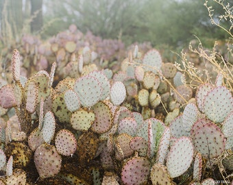 Desert Fog, Cactus after Storm, Photography Print, Monsoon, Pale Tones, Mood Photography, Modern Photo, Dreamy, Haze, Mist