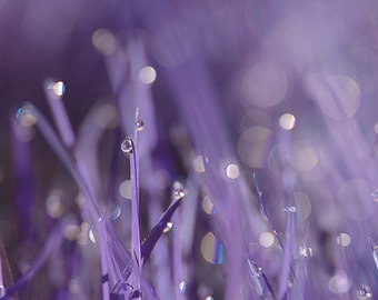 nature photo, country decor, country chic, spring wall art, ethereal art, lilac, lavender, purple, mauve