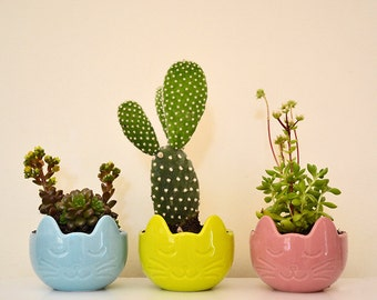 Set of three mini succulent pots with Kitty faces