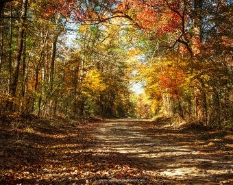 Autumn Woodland Photograph, Country Road, Autumn Landscape Fine Art Photography, Woodland Fine Art Print, Woodland Fine Art Canvas Wrap