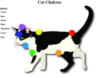 Cat And Dog Chakras