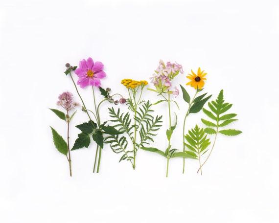Wildflowers of summer, nature art ~ photo greeting card ~ stationery ~ anemone ~ tansy ~ joe pye weed
