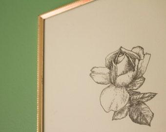 """Rose Botanical Illustration 8x10"""""""