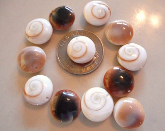 Shiva Shell Beads, 11 Piece, 14 to 19mm Drilled Side To Side Eye of Shiva Beads, Eleven Piece Lot Of Shiva Shell Beads