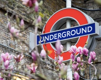London Photography - London Underground in Spring - Magnolias and Tube Sign - Photography Print