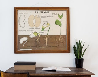 No. 9 & No. 10 Large Vintage double-sided French school poster - The Fruit and The Seed