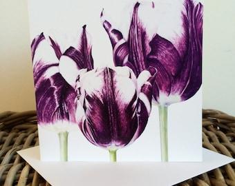 "Tulipa ""Rem's Favourite""  art card - blank inside"