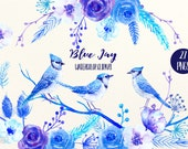 Watercolor Clipart Blue Jay - blue jays, blue flowers, festive birds, Christmas flowers for instant download scrapbook, christmas cards