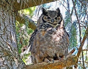 Nature Photography, Owl Photography, Great Horned Owl, Owl Decor, Owl Prints, Owl Wall Art, Owl Gifts, Bird Gifts, Wildlife Photography