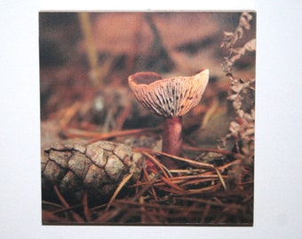 "Pink Waxcap Fungi photo print mounted on wood 6x6"""