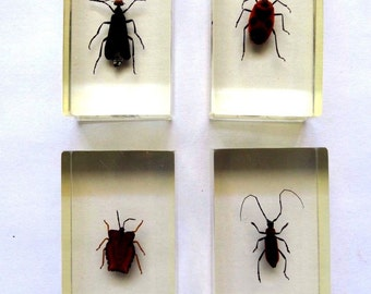 Real Mixed Insects  In Lucite - Children Education - Home Decoration - Collectibles