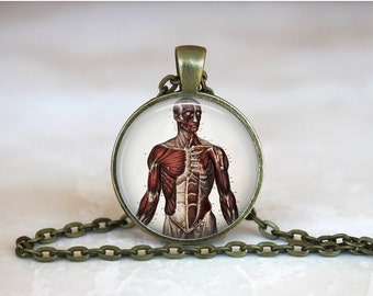 HUMAN BODY Pendant •  Muscular Illustration Anatomy •  Medical Necklace •  Medical Illustration • Gift Under 20 • Made in Australia  (P0540)