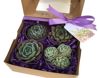 Purple Succulent Gift Box-Gardener gift-Garden in a box-Succulent Gift Box-Thank You Gift-Teacher Gift-Birthday Gift-Plant Kit-Graduation