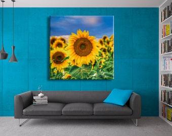 Sunflowers France 3