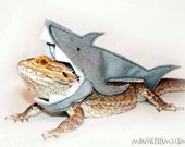 Shark outfit- clothing for bearded dragons and other small animals