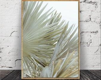 Palm Art, Palm Tree, Palm Springs Cactus, Modern Minimalist, Desert Landscape Photo